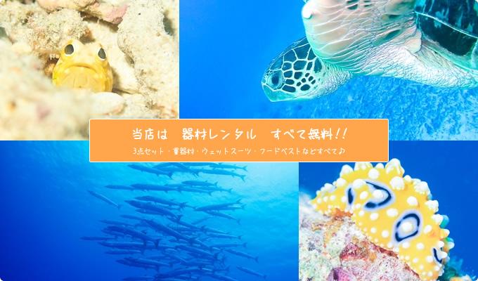 石垣島体験ダイビングはグローバルダイブへ