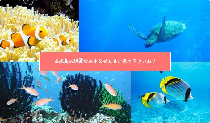 石垣島体験ファンダイビングは当店へ